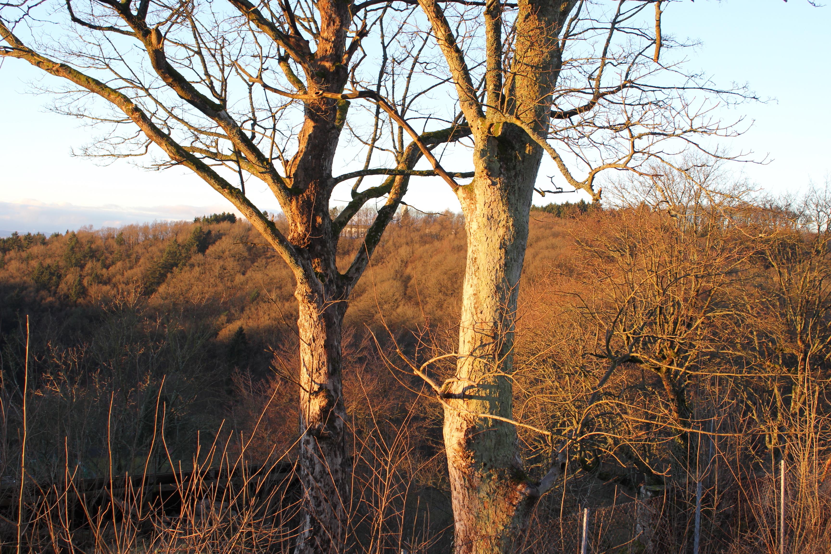 Natur Blankenheim (2)